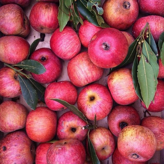 Las ventas de manzana al mercado interno crecieron 30%