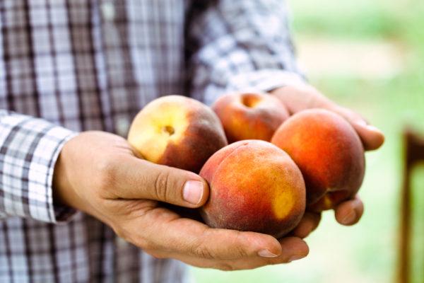 peaches-8FHLSPB
