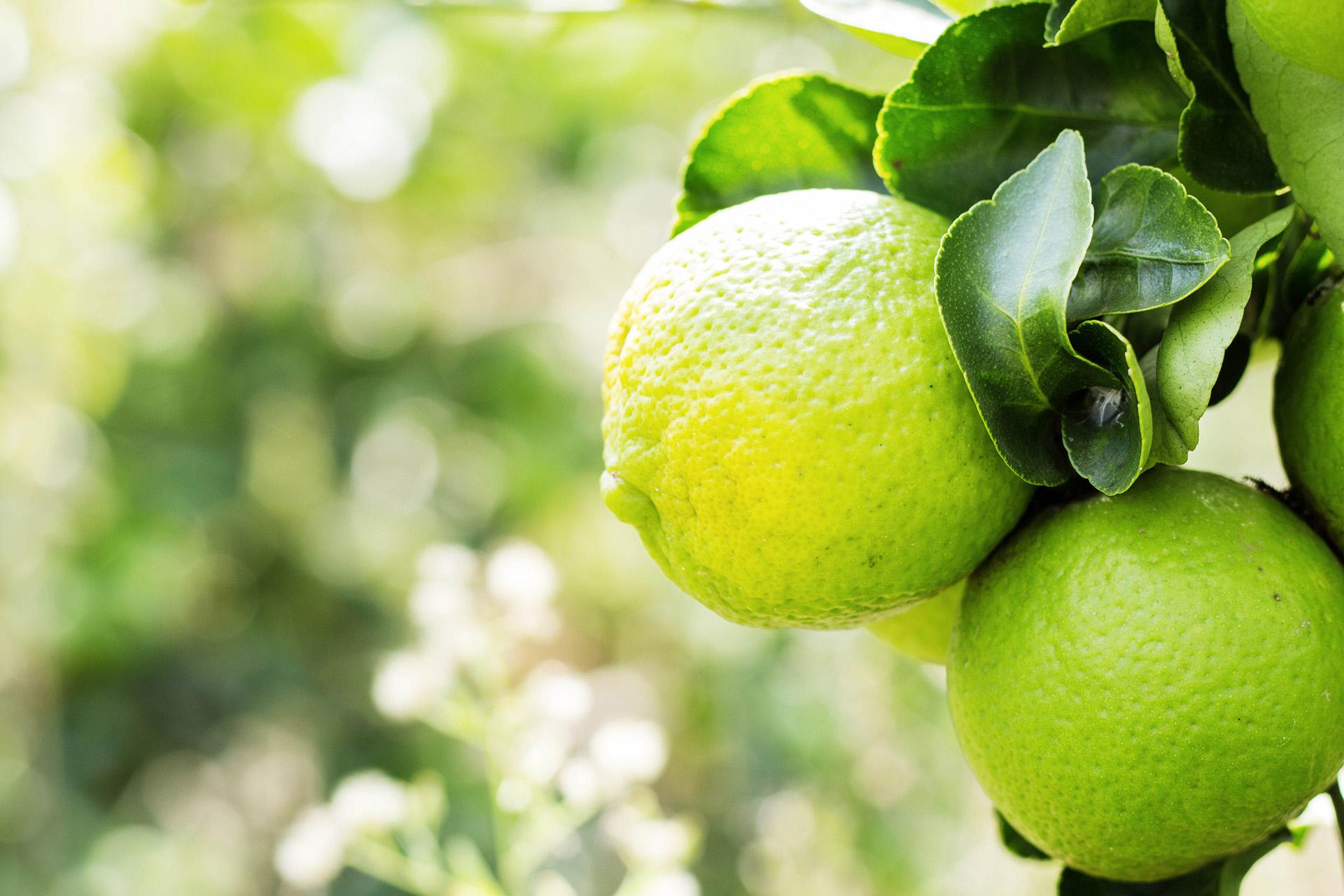 Se espera que los mercados de limón se fortalezcan