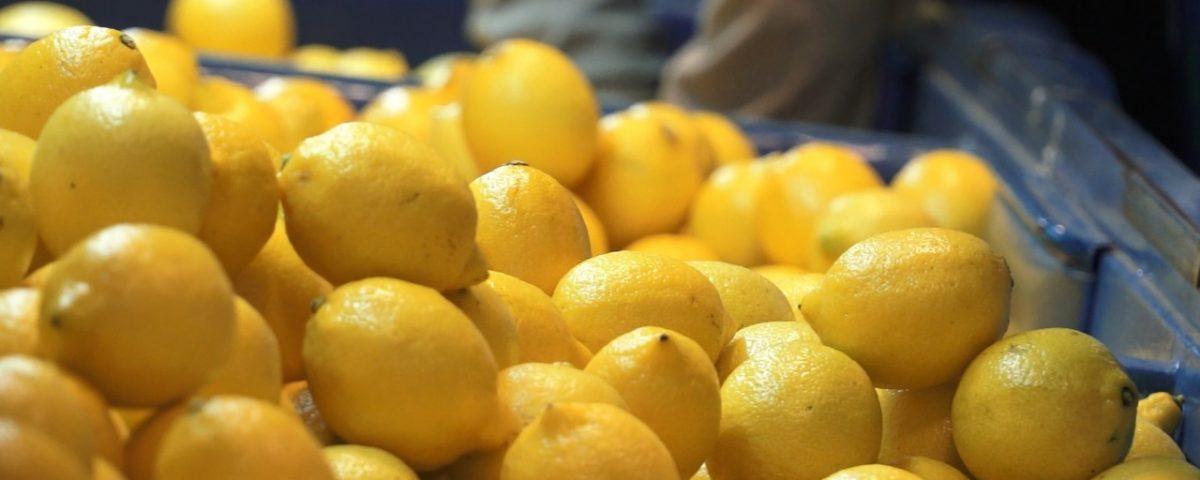 Campaña de limón 2020