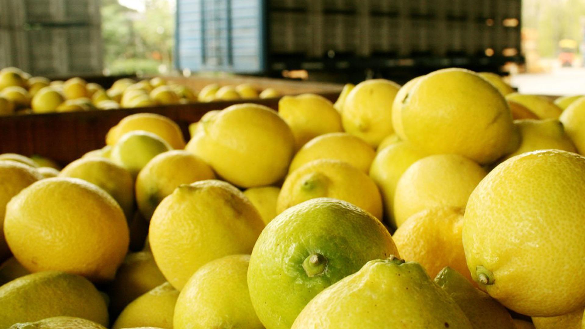 Limones argentinos, un auténtico tesoro nutricional