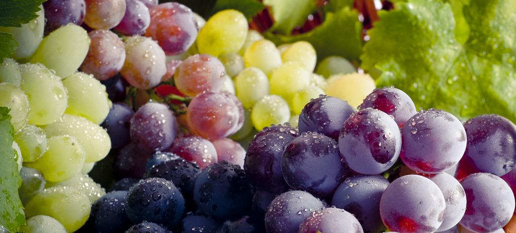 Fuertes cambios caracterizaron al negocio de uvas del hemisferio sur